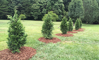 Trees & Shrubs Program